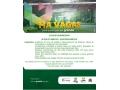 Vaga de Estágio Remunerado no Setor de Análise e Desenvolvimento de Sistemas da UPF